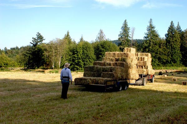 local Salt Spring hay available for delivery on the island