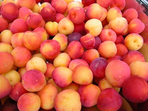 Peaches from Laughing Apple Farm